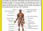 El sistema muscular | Recurso educativo 677295