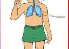 La lechuza dice Shhh...: Circulatory, Respiratory and Digestive Systems | Recurso educativo 735722