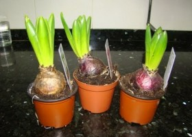 Que es reproduccion vegetativa asexual plants