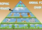 The Animal Food Chain | Recurso educativo 766083