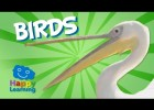 Birds | Educational Video for Kids | Recurso educativo 766085